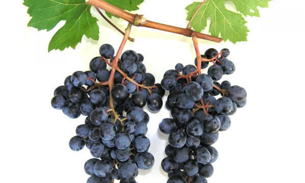 Wijngaard met 180 hectare