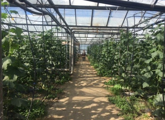 Greenhouse for sale in Sandanski